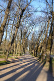 Alley in park. Royalty Free Stock Photo