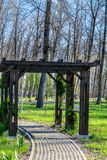Alley in the park. Spring time Royalty Free Stock Photography