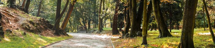 Gasse im Park in der Sonne. Alley in the park in the sunshine among the trees royalty free stock images