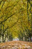 Alley in the park between trees with colorful leaves on the tree Royalty Free Stock Image