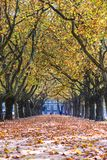Alley in the park between trees with colorful leaves on the tree Stock Photo