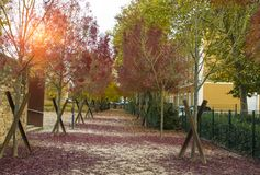Alley in a park of trees with red leaves. Autumnal season Royalty Free Stock Photography