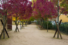 Alley in a park of trees with red leaves. Autumnal season Stock Photo