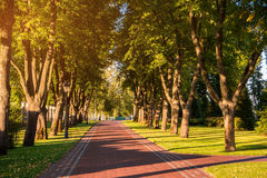Alley of park and trees. Stock Photos