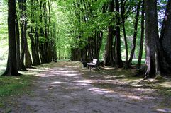 Alley in park. Wide lane among trees with nearby bench Royalty Free Stock Photos