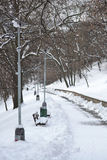 Alley in the park in winter Stock Image