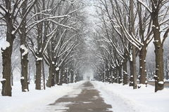 Alley in park in winter Stock Photos