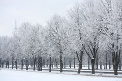 Alley in park in winter Stock Photography