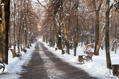 Alley in the park in winter Stock Photography