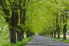 Alley with paved road Stock Photo