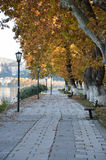 Alley of plane trees Royalty Free Stock Photos