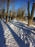 Alley among the poplars in the winter. Alley among poplar in the evening at sunset in the Urals Stock Images