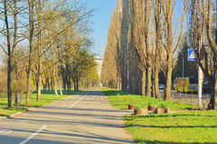 Alley of poplars Stock Images