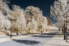 Alley in public park, infrared view Stock Photography