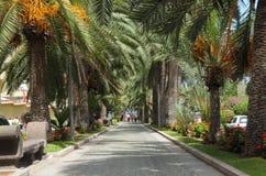 Alley in Puerto de La Cruz, Tenerife Spain Stock Photos