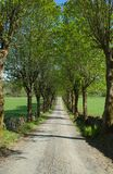 Alley road at late spring, almost summer, gravelled road, stone wall on the sides. stock photo