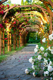 Alley of roses Stock Photography