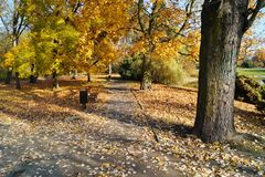 The alley in the shade of the autumn trees Stock Photography