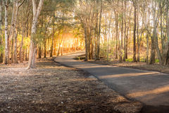 The alley in the shade of the trees Royalty Free Stock Photography
