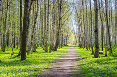 Alley shined by solar beams in spring park Stock Photo