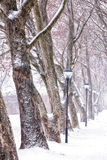 Alley in snowy day Stock Photos