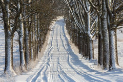 Alley in snowy morning Royalty Free Stock Photo