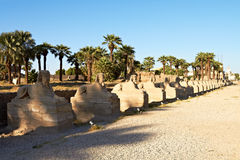 Alley of Sphinxes, Luxor Royalty Free Stock Photography