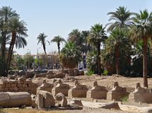 Alley of sphinxes in Luxor stock photos