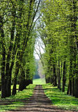 An alley in spring Royalty Free Stock Photo