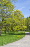 Alley In The spring Park. Springtime Alley In The Park, Tallinn City,Estonia Stock Photo