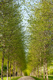 Alley in spring time Royalty Free Stock Photos