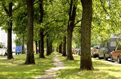 Alley between streets. Path among the trees on both sides of parked cars Royalty Free Stock Photos