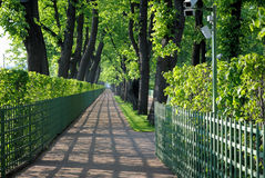 Alley of the Summer Garden. Royalty Free Stock Image