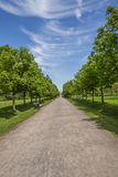 Alley In The Summer Park Royalty Free Stock Image