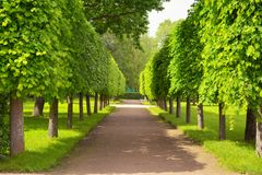 Alley in summer time in Peterhof, St.Petersburg, Russia Royalty Free Stock Photography