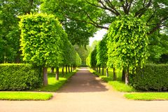 Alley in summer time in Peterhof, St.Petersburg, Russia Stock Images