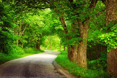 Alley in summertime. Asphalt road with trees on the side in summertime royalty free stock photo