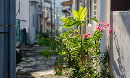 In The Alley Royalty Free Stock Photography