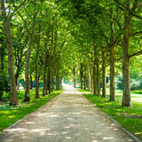 Alley in tiergarten berlin Stock Photography