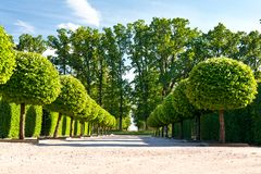Alley of topiary green trees in ornamental garden. Stock Image