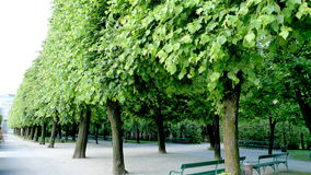 Alley of trees. Green trees in the garden in the morning Stock Photos