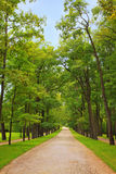 Alley of trees Stock Photo