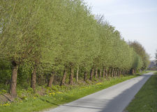 Alley of trees Royalty Free Stock Images