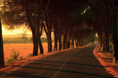 Alley of Trees. Tree lined road in Tuscany, Italy, illuminated in soft light of the setting sun Stock Photo