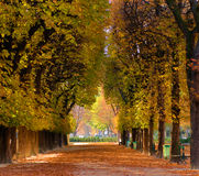 Alley of trees in autumn. Falling leaves in jardin du Luxembourg, Paris Royalty Free Stock Images