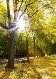 Alley of trees in autumn in the city park Royalty Free Stock Photography