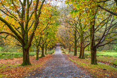 Alley with trees in autumn in Snowdonia National Park in Wales Royalty Free Stock Image