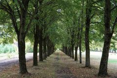 Alley ,trees on both sides,green. yellow leaves royalty free stock photos