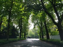 Alley of the trees royalty free stock image