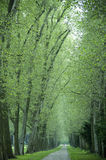 Alley of trees Royalty Free Stock Image